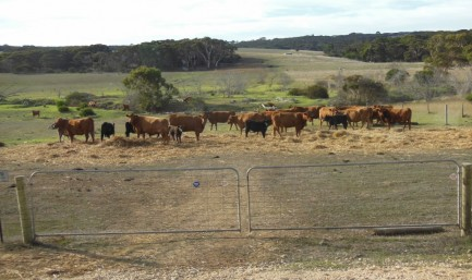 Newsletter No2 June 2016  featuring  AGM and Kangaroo Island