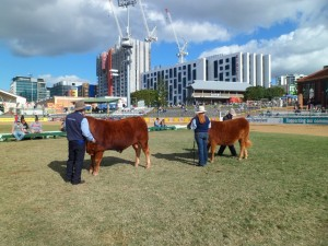 Ekka 2016 Supreme SD judging