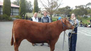Gum Hill  steer for Royal Adelaide show 2017