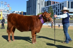 Kildare Sassy Royal Brisbane Show 2017