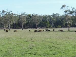 South Australia trip 2016 077 (1024x768)